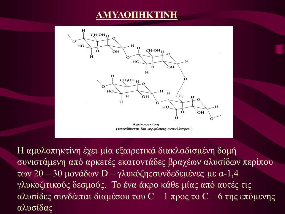 ΑΜΥΛΟΠΗΚΤΙΝΗ Η αμυλοπηκτίνη έχει μία εξαιρετικά διακλαδισμένη δομή συνιστάμενη από αρκετές εκατοντάδες βραχέων αλυσίδων περίπου των 20 – 30 μονάδων D