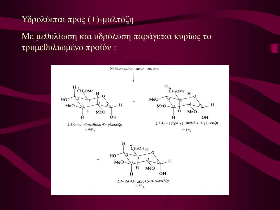 Υδρολύεται προς (+)-μαλτόζη Με μεθυλίωση και υδρόλυση παράγεται κυρίως το τρυμεθυλιωμένο προϊόν :