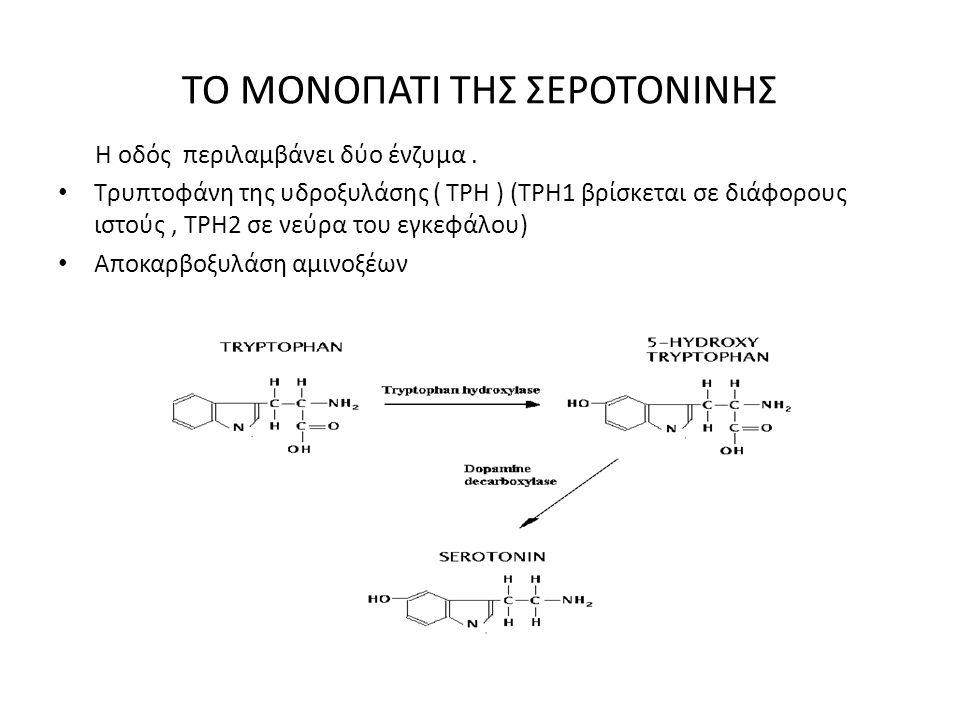 ΤΟ ΜΟΝΟΠΑΤΙ ΤΗΣ ΣΕΡΟΤΟΝΙΝΗΣ Η οδός περιλαμβάνει δύο ένζυμα. Τρυπτοφάνη της υδροξυλάσης ( TPH ) (ΤΡΗ1 βρίσκεται σε διάφορους ιστούς, ΤΡΗ2 σε νεύρα του