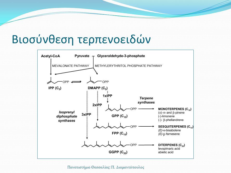 Βιοσύνθεση τερπενοειδών Πανεπιστήμιο Θεσσαλίας: Π. Διαμαντόπουλος
