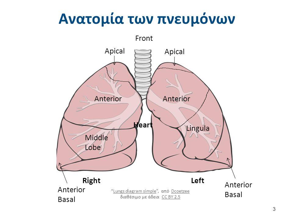 Τεχνικές με τα χέρια του Φ/Θτή (6 από 6) Οι πλήξεις και οι δονήσεις δεν βελτιώνουν: Πνευμονικούς όγκους ΡΟ2, PCO2 ή SatO2 copd.about.com 24 Προσοχή στις αντενδείξεις Πίεση στην εκπνοή/δόνηση vs μόνο πίεση στην εκπνοή ή vs μόνο δόνηση αύξηση στη PEFR κατά 50% Οι δονήσεις υψηλής συχνότητας  μειώνουν το ιξώδες της βλέννας  προκαλούν αύξηση της PEFR  βελτιώνουν την προώθηση της βλέννας (Mcllwaine, 2007; Gosselink, 2004; Pryor & Prasad, 2002; Frownfelter & Dean, 1996; Γραμματοπούλου & Βαβουράκη, 1999; Hough, 1991)