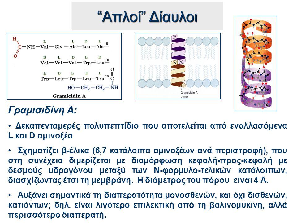 """""""Απλοί"""" Δίαυλοι Γραμισιδίνη A: Δεκαπενταμερές πολυπεπτίδιο που αποτελείται από εναλλασόμενα L και D αμινοξέα Σχηματίζει β-έλικα (6,7 κατάλοιπα αμινοξέ"""