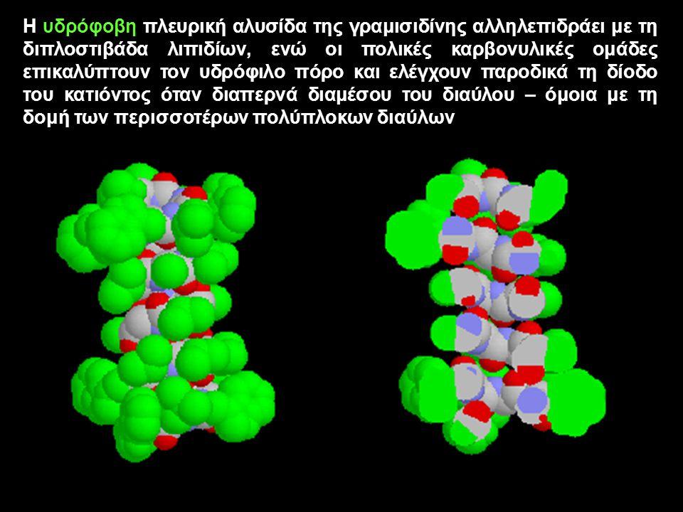 Η υδρόφοβη πλευρική αλυσίδα της γραμισιδίνης αλληλεπιδράει με τη διπλοστιβάδα λιπιδίων, ενώ οι πολικές καρβονυλικές ομάδες επικαλύπτουν τον υδρόφιλο π