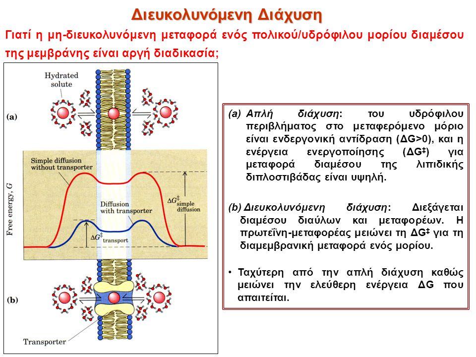 (a)Απλή διάχυση: του υδρόφιλου περιβλήματος στο μεταφερόμενο μόριο είναι ενδεργονική αντίδραση (ΔG>0), και η ενέργεια ενεργοποίησης (ΔG ‡ ) για μεταφο