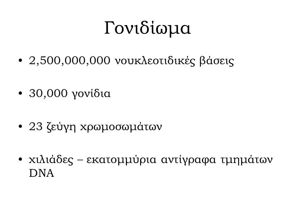 Γονιδίωμα 2,500,000,000 νουκλεοτιδικές βάσεις 30,000 γονίδια 23 ζεύγη χρωμοσωμάτων χιλιάδες – εκατομμύρια αντίγραφα τμημάτων DNA