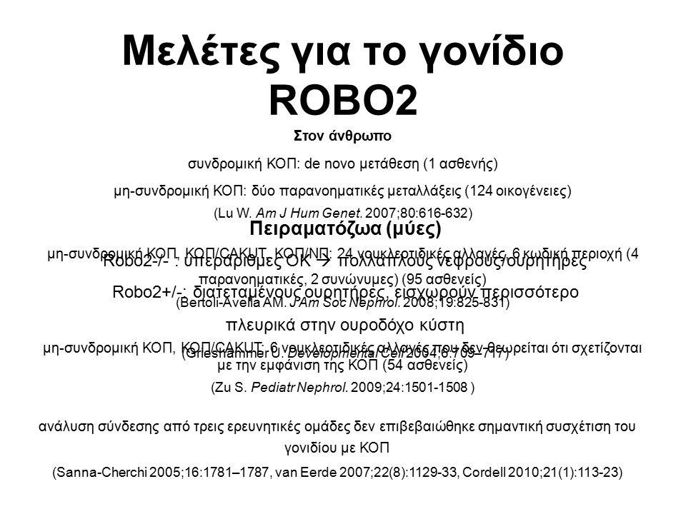 Μελέτες για το γονίδιο ROBO2 Πειραματόζωα (μύες) Robo2-/- : υπεράριθμες ΟΚ  πολλαπλούς νεφρούς/ουρητήρες Robo2+/-: διατεταμένους ουρητήρες, εισχωρούν