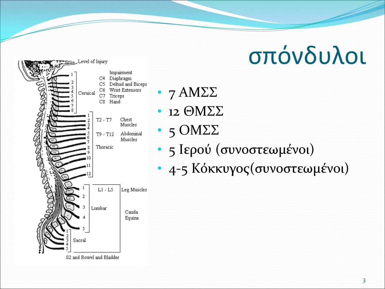 ανατομία Ο ΜΔ αποτελείται από 4 ομόκεντρα τοποθετημένους ιστούς : Ινώδης δακτύλιος (anulus fibrosus) Πυκνές δέσμες ινών κολλαγόνου Ινοχόνδρινος δακτύλιος Μεταβατική ζώνη Κεντρικός πηκτοειδής πυρήνας (nucleous pulposus).