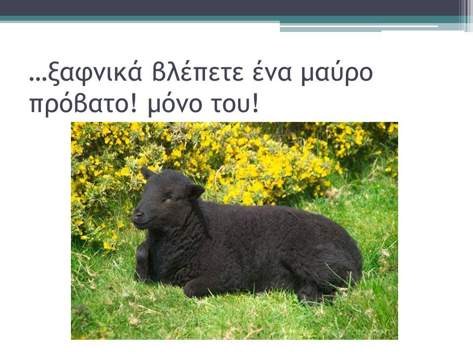 …ξαφνικά βλέπετε ένα μαύρο πρόβατο! μόνο του!