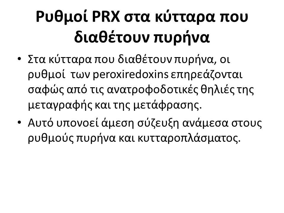 Ρυθμοί PRX στα κύτταρα που διαθέτουν πυρήνα Στα κύτταρα που διαθέτουν πυρήνα, οι ρυθμοί των peroxiredoxins επηρεάζονται σαφώς από τις ανατροφοδοτικές