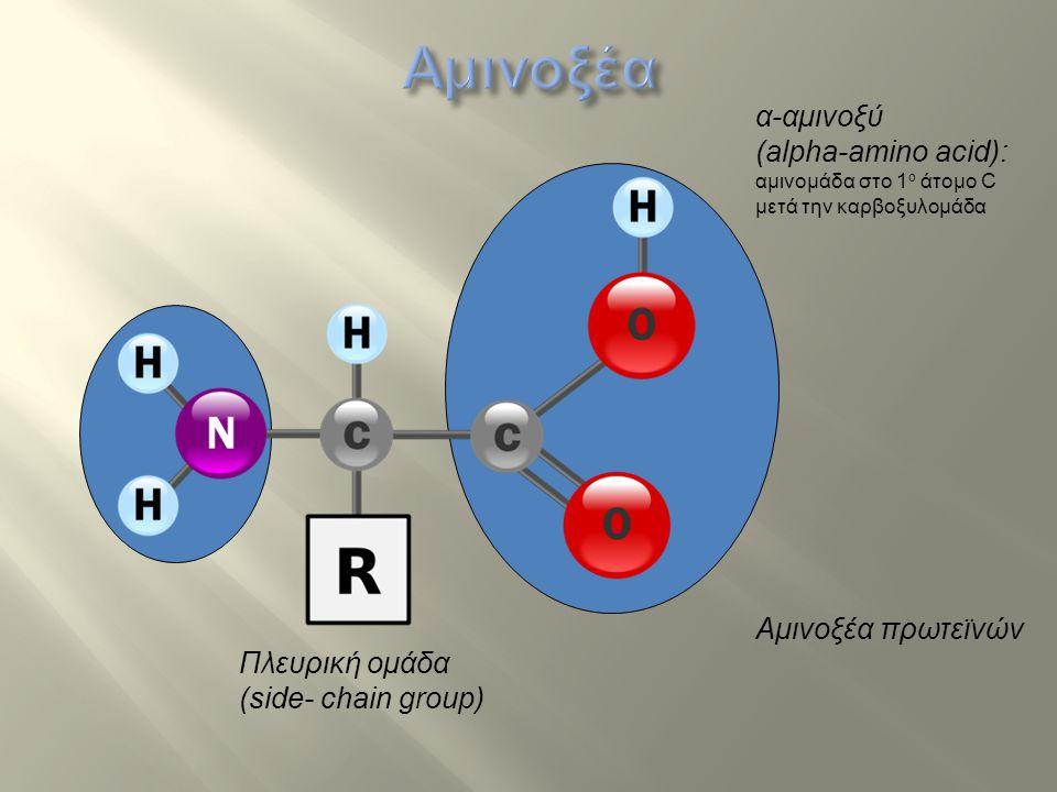 … περιγράφει το τρισδιάστατο σχήμα της πρωτεϊνης.