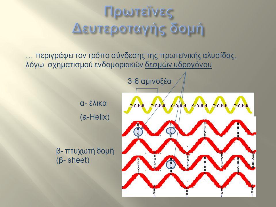 α- έλικα (a-Helix) β- πτυχωτή δομή (β- sheet) … περιγράφει τον τρόπο σύνδεσης της πρωτεϊνικής αλυσίδας, λόγω σχηματισμού ενδομοριακών δεσμών υδρογόνου