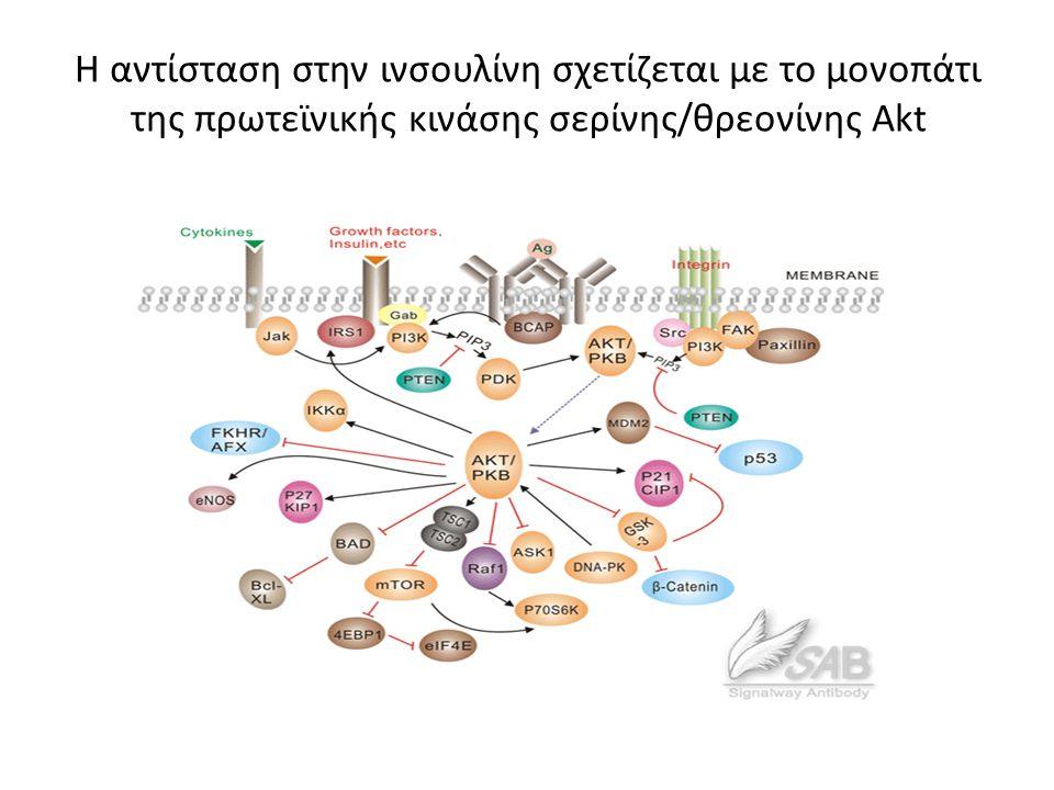Η αντίσταση στην ινσουλίνη σχετίζεται με το μονοπάτι της πρωτεϊνικής κινάσης σερίνης/θρεονίνης Akt