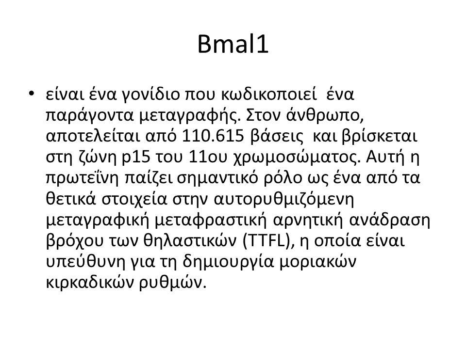 Βmal1 είναι ένα γονίδιο που κωδικοποιεί ένα παράγοντα μεταγραφής.