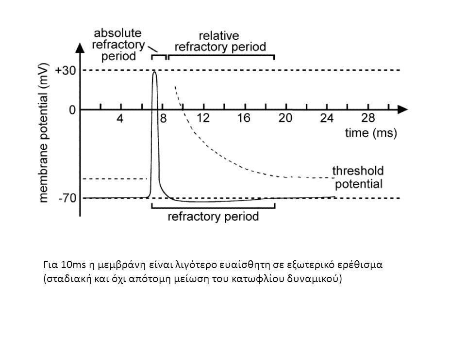 Για 10ms η μεμβράνη είναι λιγότερο ευαίσθητη σε εξωτερικό ερέθισμα (σταδιακή και όχι απότομη μείωση του κατωφλίου δυναμικού)