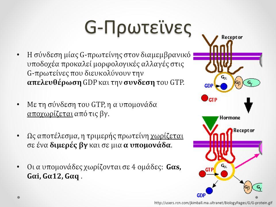 G-Πρωτεϊνες Η σύνδεση μίας G-πρωτείνης στον διαμεμβρανικό υποδοχέα προκαλεί μορφολογικές αλλαγές στις G-πρωτείνες που διευκολύνουν την απελευθέρωση GDP και την συνδεση του GTP.