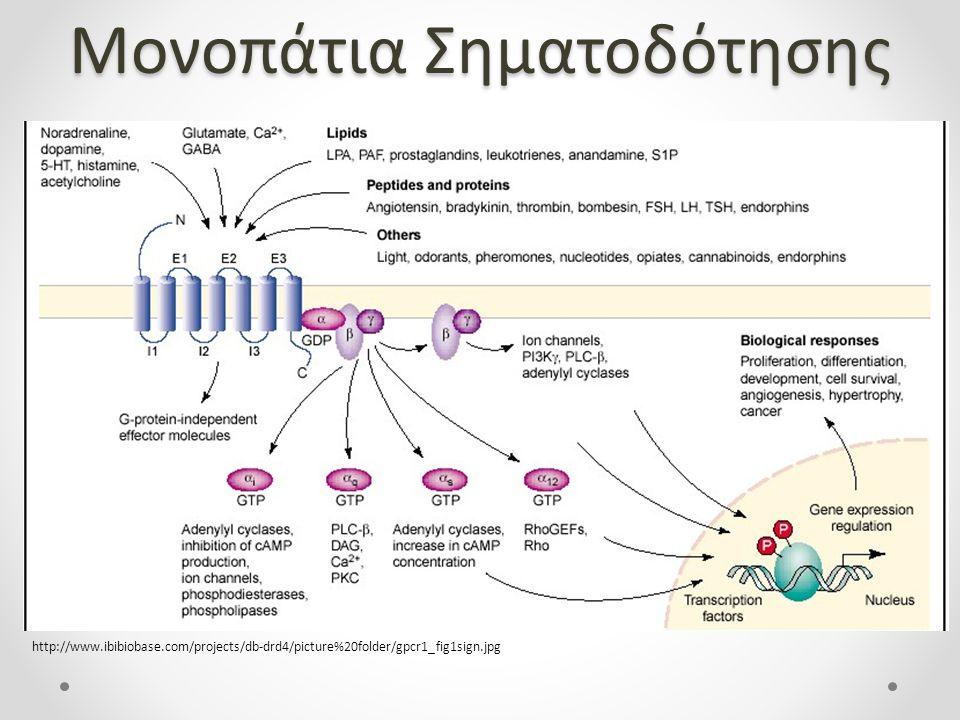 Μονοπάτια Σηματοδότησης http://www.ibibiobase.com/projects/db-drd4/picture%20folder/gpcr1_fig1sign.jpg