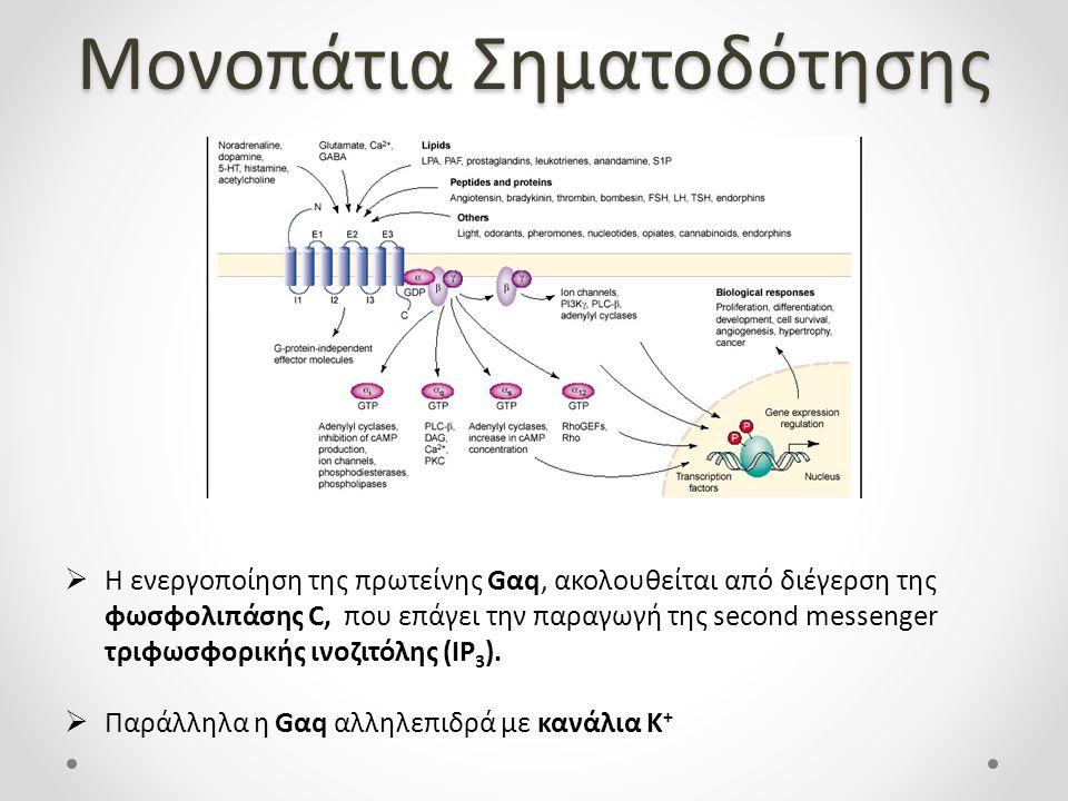 Μονοπάτια Σηματοδότησης  Η ενεργοποίηση της πρωτείνης Gαq, ακολουθείται από διέγερση της φωσφολιπάσης C, που επάγει την παραγωγή της second messenger τριφωσφορικής ινοζιτόλης (IP 3 ).