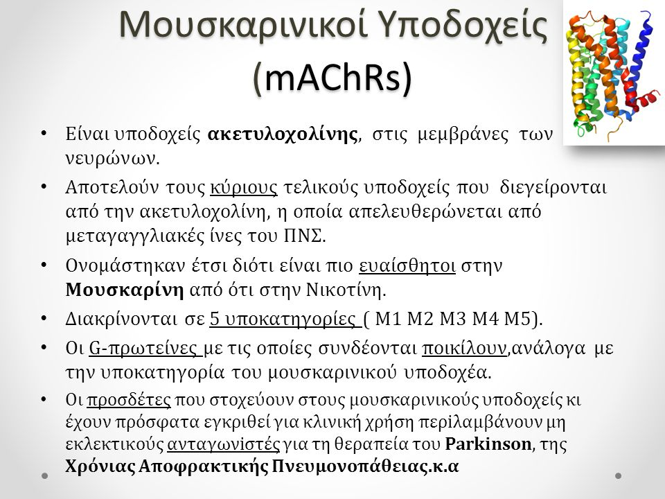 Μουσκαρινικοί Υποδοχείς (mAChRs) Eίναι υποδοχείς ακετυλοχολίνης, στις μεμβράνες των νευρώνων.