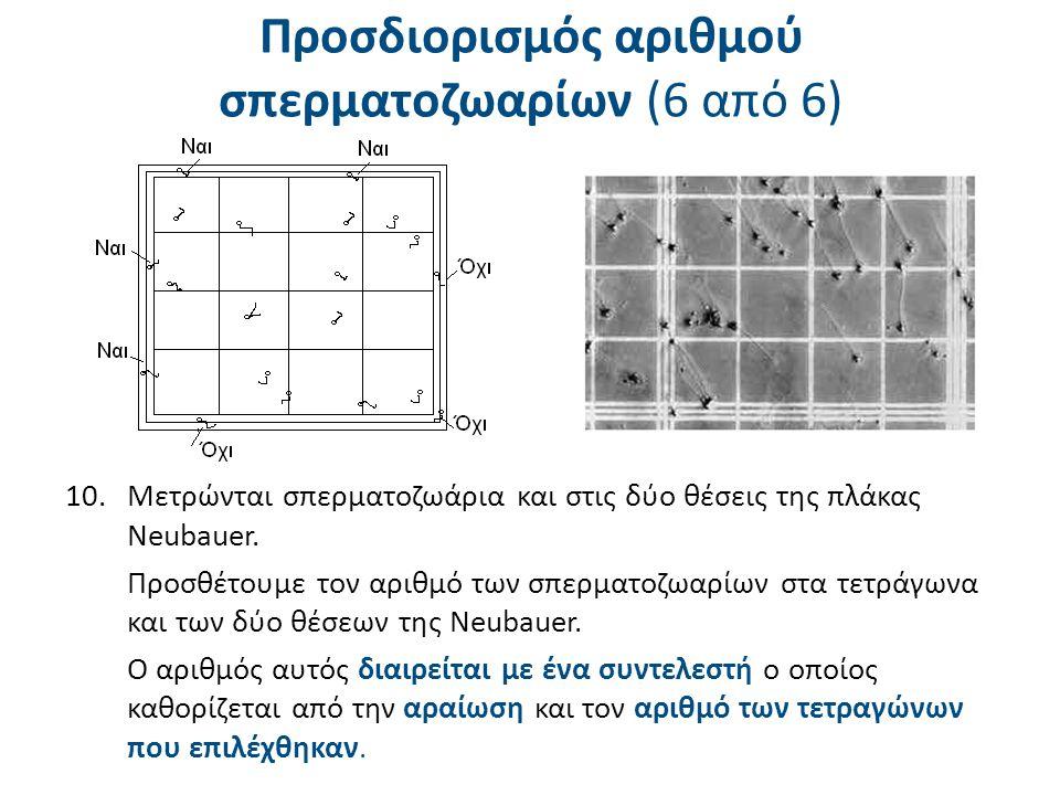 Αραίωση Αριθμός τετραγώνων που μετρήθηκαν 25105 1 / 2 1004020 1 / 540168 1 / 102084 1 / 201042 1 / 5041,60,8 Πίνακας συντελεστών για υπολογισμό αριθμού σπερματοζωαρίων Π.χ.