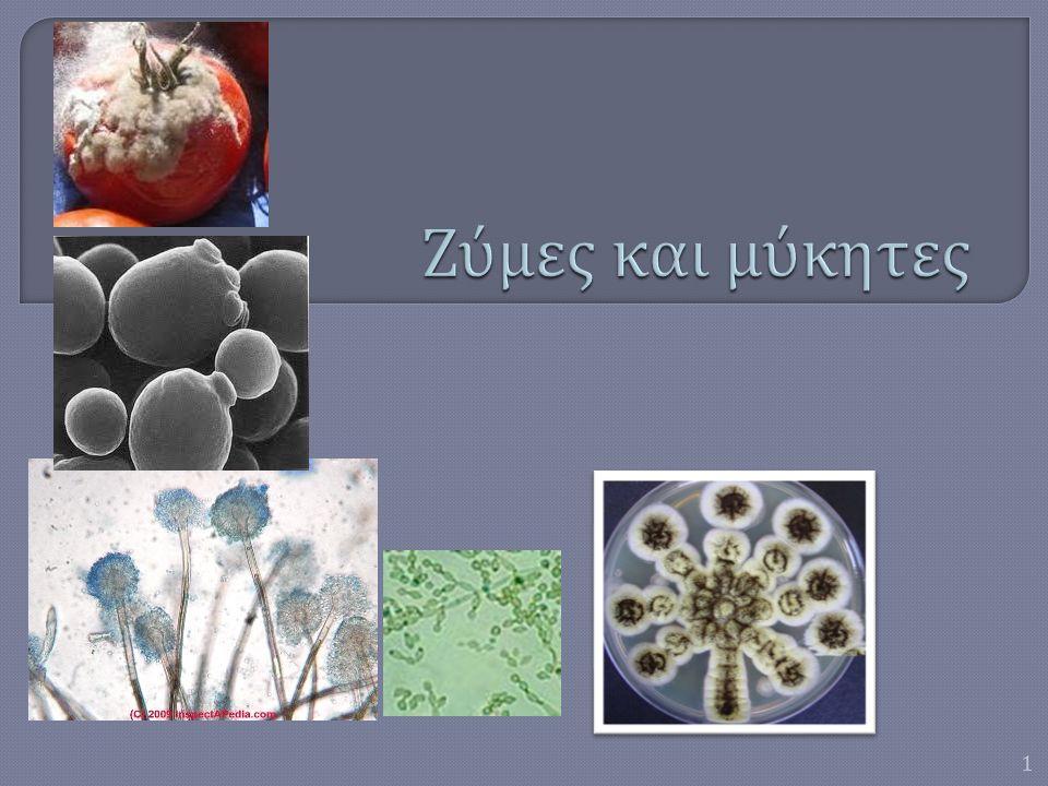 ΖΎΜΕΣΜΥΚΗΤΕΣ  Οι ζύμες είναι αερόβιοι και δυνητικά αναερόβιοι μονοκύτταροι μύκητες.