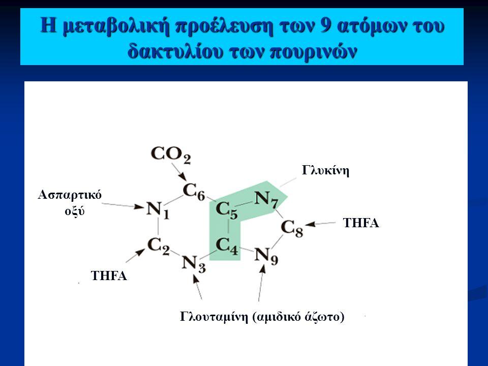 Η μεταβολική προέλευση των 9 ατόμων του δακτυλίου των πουρινών Γλυκίνη Ασπαρτικό οξύ Γλουταμίνη (αμιδικό άζωτο) THFA