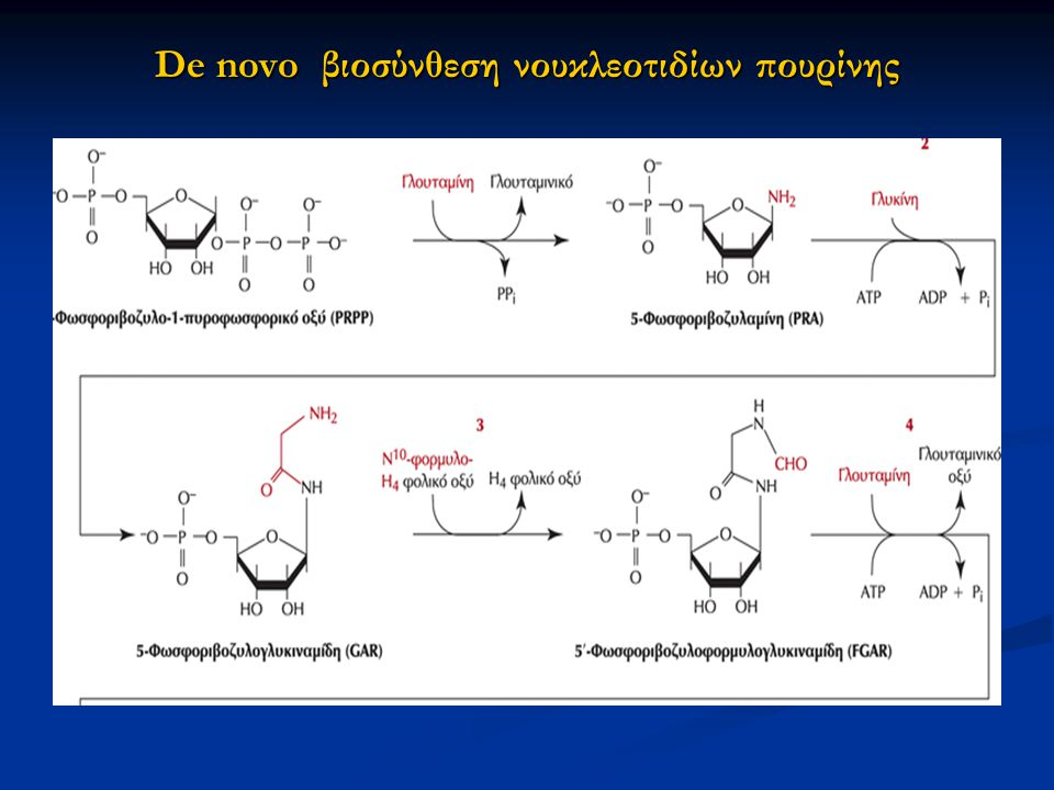 De novo βιοσύνθεση νουκλεοτιδίων πουρίνης