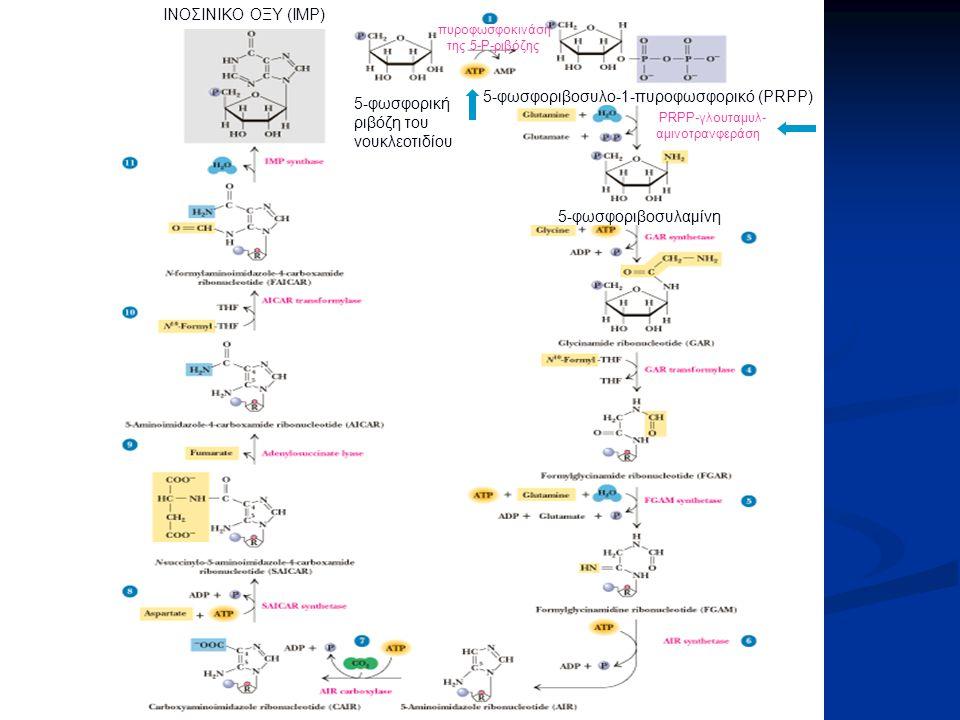 5-φωσφορική ριβόζη του νουκλεοτιδίου 5-φωσφοριβοσυλο-1-πυροφωσφορικό (PRPP) 5-φωσφοριβοσυλαμίνη ΙΝΟΣΙΝΙΚΟ ΟΞΥ (ΙΜΡ) PRPP-γλουταμυλ- αμινοτρανφεράση πυ