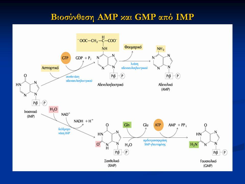 Βιοσύνθεση ΑΜP και GMP από IMP