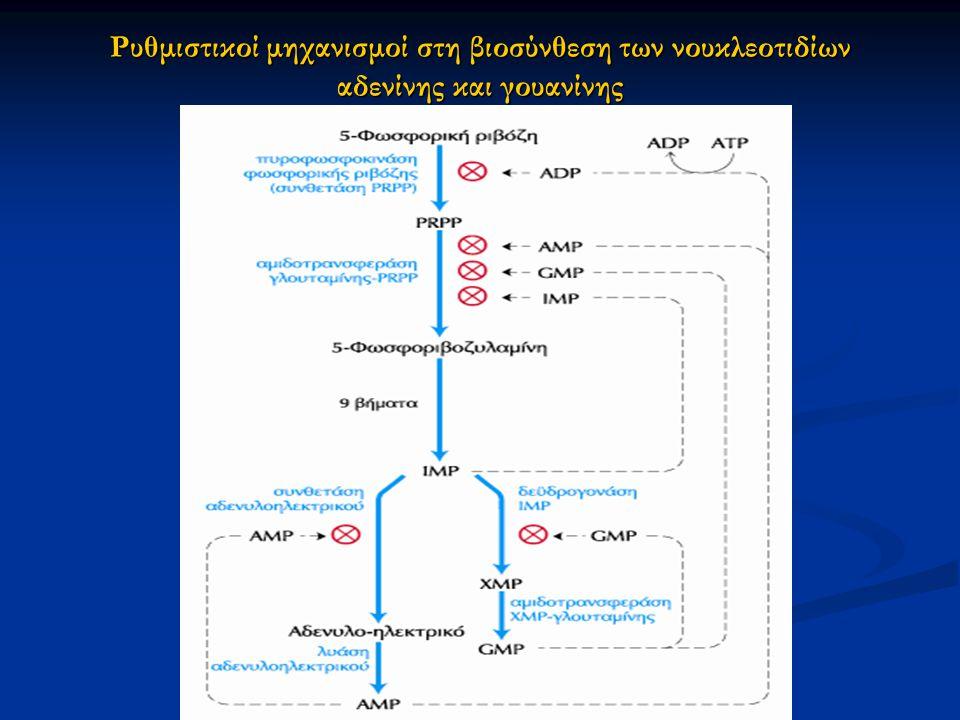 Ρυθμιστικοί μηχανισμοί στη βιοσύνθεση των νουκλεοτιδίων αδενίνης και γουανίνης