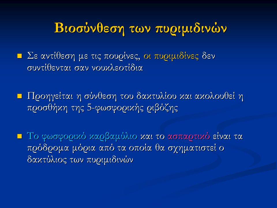 Βιοσύνθεση των πυριμιδινών Σε αντίθεση με τις πουρίνες, οι πυριμιδίνες δεν συντίθενται σαν νουκλεοτίδια Σε αντίθεση με τις πουρίνες, οι πυριμιδίνες δε