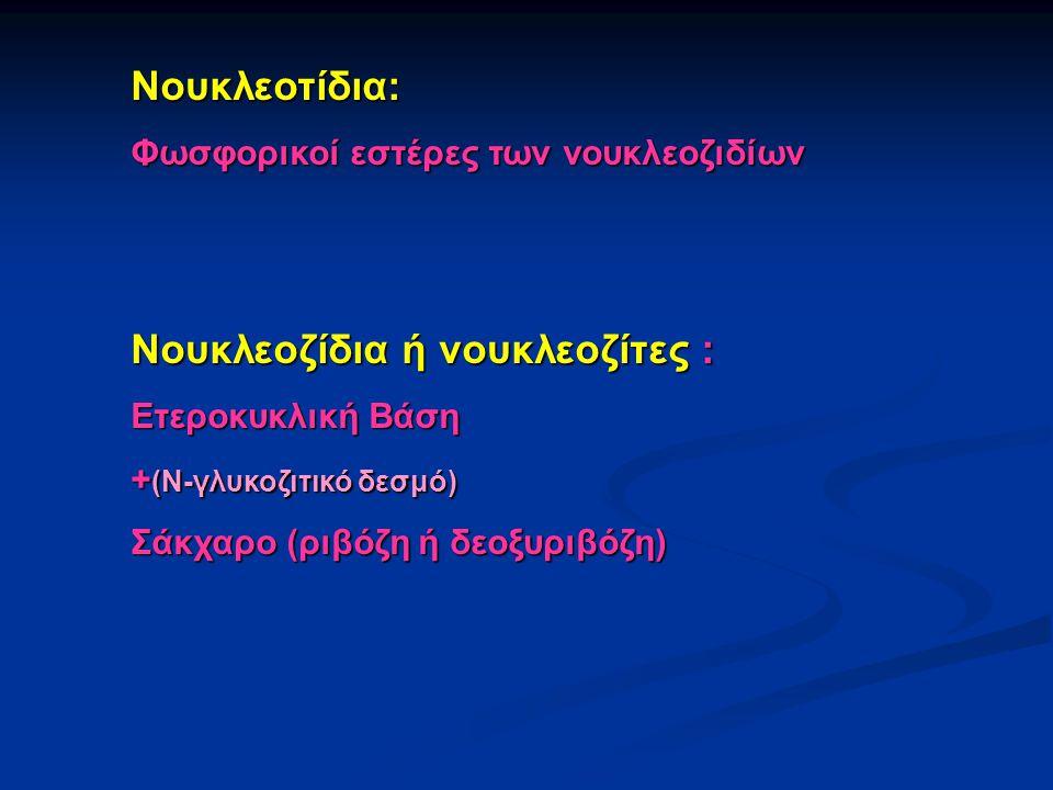 Νουκλεοτίδια: Φωσφορικοί εστέρες των νουκλεοζιδίων Νουκλεοζίδια ή νουκλεοζίτες : Ετεροκυκλική Βάση + (Ν-γλυκοζιτικό δεσμό) Σάκχαρο (ριβόζη ή δεοξυριβό