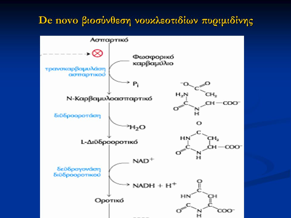 De novo βιοσύνθεση νουκλεοτιδίων πυριμιδίνης