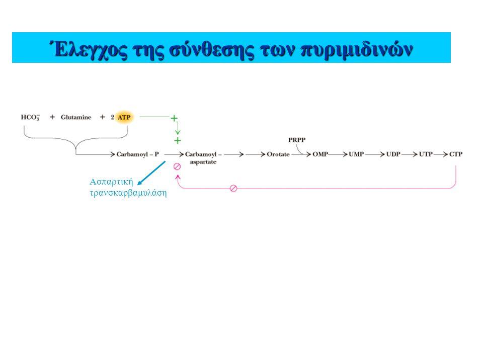 Έλεγχος της σύνθεσης των πυριμιδινών Ασπαρτική τρανσκαρβαμυλάση