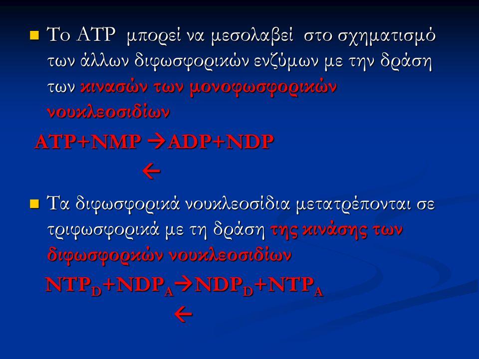 To ATP μπορεί να μεσολαβεί στο σχηματισμό των άλλων διφωσφορικών ενζύμων με την δράση των κινασών των μονοφωσφορικών νουκλεοσιδίων To ATP μπορεί να με