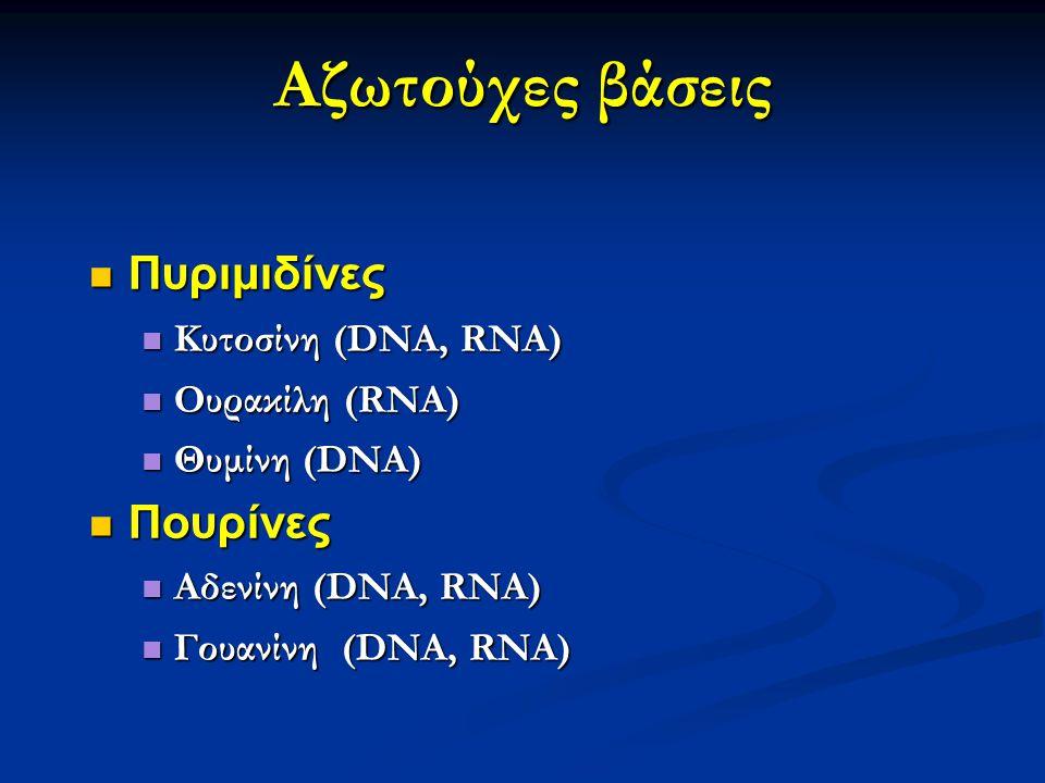 Αζωτούχες βάσεις Πυριμιδίνες Πυριμιδίνες Κυτοσίνη (DNA, RNA) Κυτοσίνη (DNA, RNA) Ουρακίλη (RNA) Ουρακίλη (RNA) Θυμίνη (DNA) Θυμίνη (DNA) Πουρίνες Πουρ