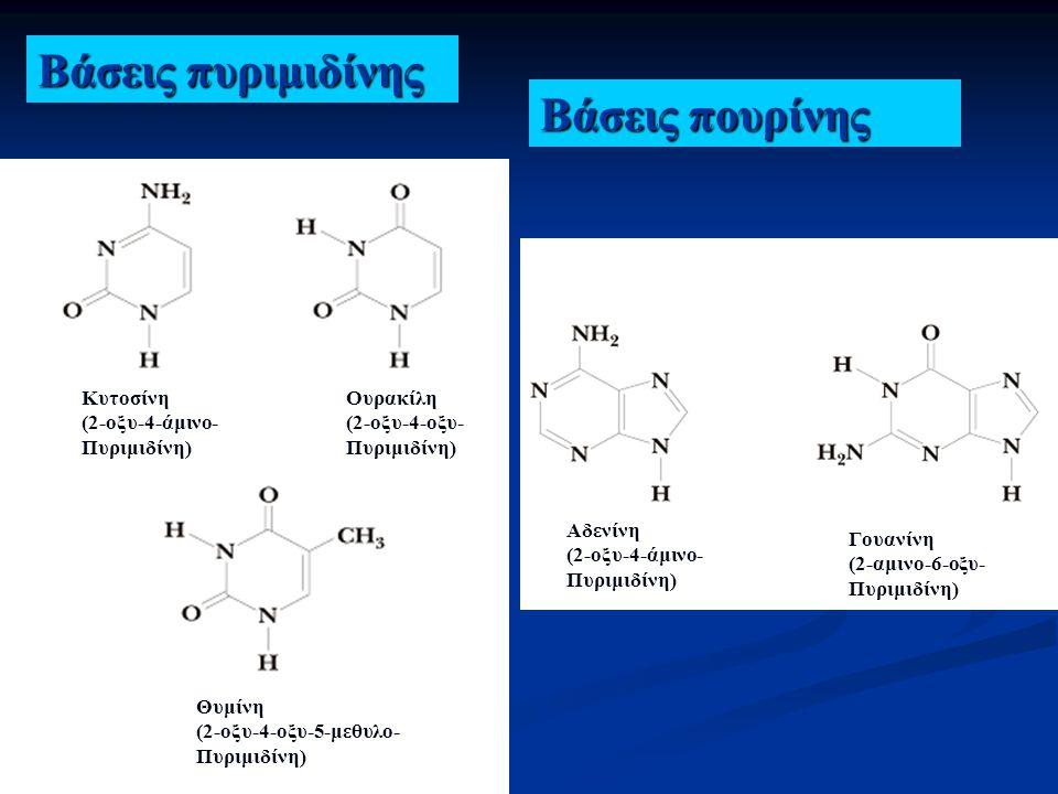 Βάσεις πυριμιδίνης Βάσεις πουρίνης Κυτοσίνη (2-οξυ-4-άμινο- Πυριμιδίνη) Ουρακίλη (2-οξυ-4-οξυ- Πυριμιδίνη) Θυμίνη (2-οξυ-4-οξυ-5-μεθυλο- Πυριμιδίνη) Α