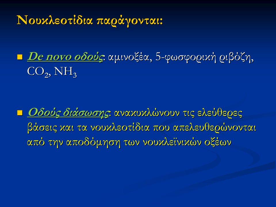 Nουκλεοτίδια παράγονται: De novo οδούς: αμινοξέα, 5-φωσφορική ριβόζη, CO 2, NH 3 De novo οδούς: αμινοξέα, 5-φωσφορική ριβόζη, CO 2, NH 3 Οδούς διάσωση