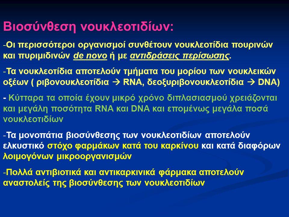 Βιοσύνθεση νουκλεοτιδίων: -Οι περισσότεροι οργανισμοί συνθέτουν νουκλεοτίδια πουρινών και πυριμιδινών de novo ή με αντιδράσεις περίσωσης. -Τα νουκλεοτ