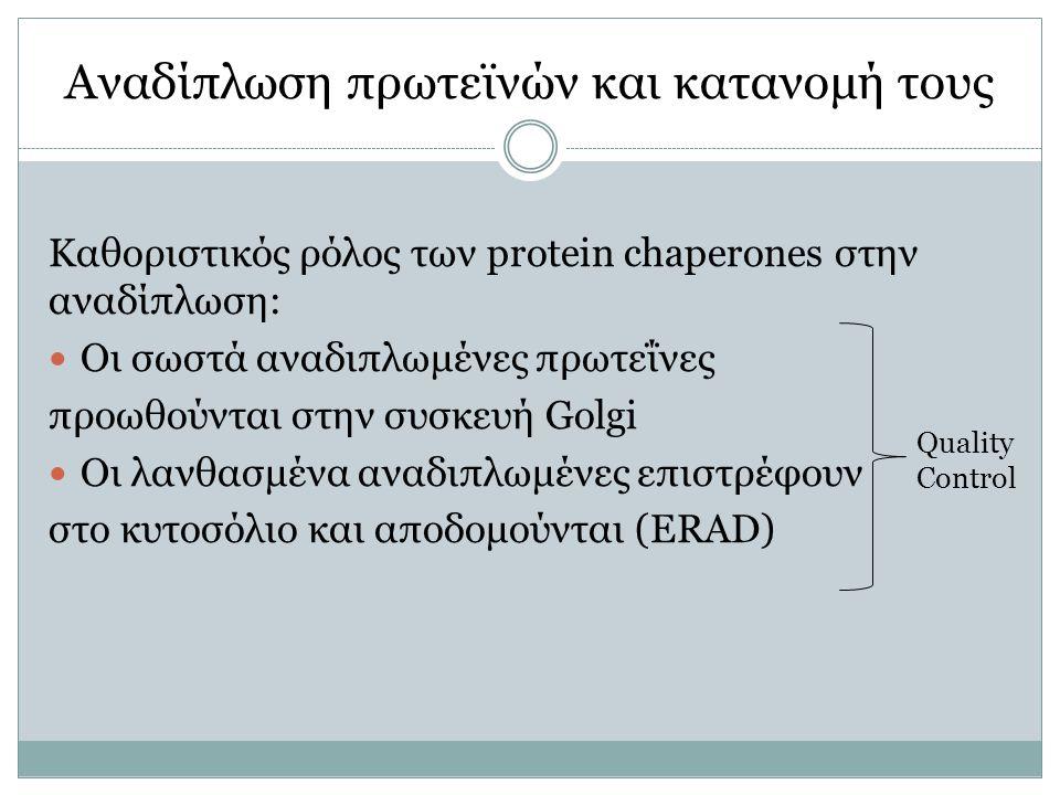 Αναδίπλωση πρωτεϊνών και κατανομή τους Καθοριστικός ρόλος των protein chaperones στην αναδίπλωση: Οι σωστά αναδιπλωμένες πρωτεΐνες προωθούνται στην συσκευή Golgi Οι λανθασμένα αναδιπλωμένες επιστρέφουν στο κυτοσόλιο και αποδομούνται (ERAD) Quality Control