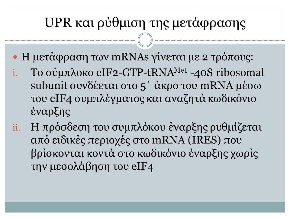 UPR και ρύθμιση της μετάφρασης H μετάφραση των mRNAs γίνεται με 2 τρόπους: i. Το σύμπλοκο eIF2-GTP-tRNA Met -40S ribosomal subunit συνδέεται στο 5΄ άκ