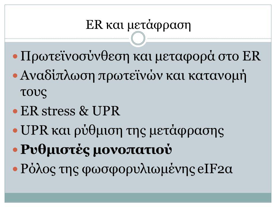 ER και μετάφραση Πρωτεϊνοσύνθεση και μεταφορά στο ER Αναδίπλωση πρωτεϊνών και κατανομή τους ER stress & UPR UPR και ρύθμιση της μετάφρασης Ρυθμιστές μ
