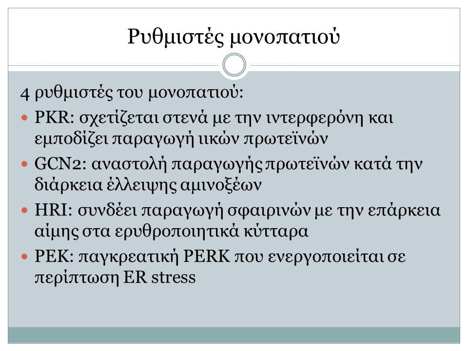 Ρυθμιστές μονοπατιού 4 ρυθμιστές του μονοπατιού: PKR: σχετίζεται στενά με την ιντερφερόνη και εμποδίζει παραγωγή ιικών πρωτεϊνών GCN2: αναστολή παραγω