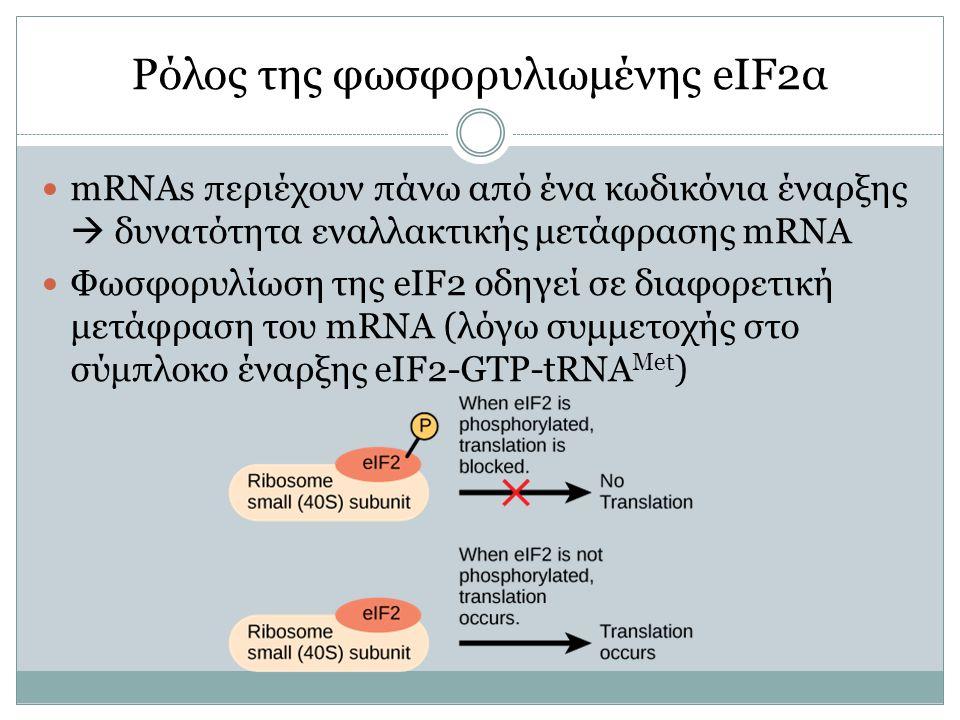 mRNAs περιέχουν πάνω από ένα κωδικόνια έναρξης  δυνατότητα εναλλακτικής μετάφρασης mRNA Φωσφορυλίωση της eIF2 οδηγεί σε διαφορετική μετάφραση του mRNA (λόγω συμμετοχής στο σύμπλοκο έναρξης eIF2-GTP-tRNA Met )