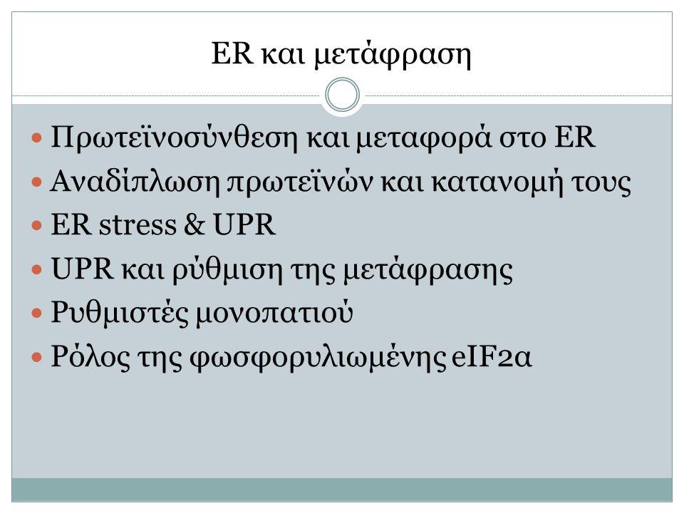 ER και μετάφραση Πρωτεϊνοσύνθεση και μεταφορά στο ER Αναδίπλωση πρωτεϊνών και κατανομή τους ER stress & UPR UPR και ρύθμιση της μετάφρασης Ρυθμιστές μονοπατιού Ρόλος της φωσφορυλιωμένης eIF2α