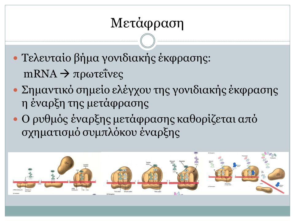 Μετάφραση Τελευταίο βήμα γονιδιακής έκφρασης: mRNA  πρωτεΐνες Σημαντικό σημείο ελέγχου της γονιδιακής έκφρασης η έναρξη της μετάφρασης Ο ρυθμός έναρξης μετάφρασης καθορίζεται από σχηματισμό συμπλόκου έναρξης