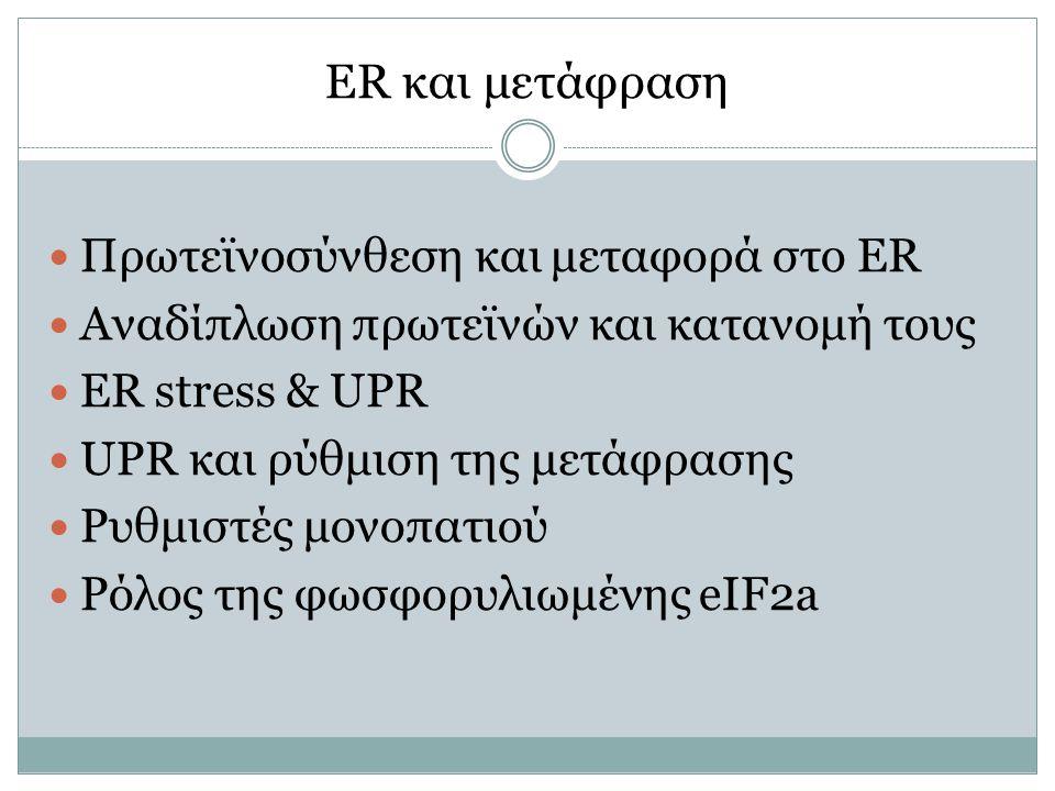 ER και μετάφραση Πρωτεϊνοσύνθεση και μεταφορά στο ER Αναδίπλωση πρωτεϊνών και κατανομή τους ER stress & UPR UPR και ρύθμιση της μετάφρασης Ρυθμιστές μονοπατιού Ρόλος της φωσφορυλιωμένης eIF2a