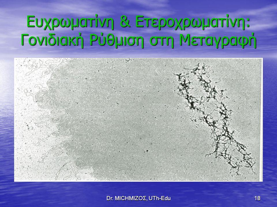 Dr. ΜΙCHΜΙΖΟΣ, UTh-Edu18 Ευχρωματίνη & Ετεροχρωματίνη: Γονιδιακή Ρύθμιση στη Μεταγραφή