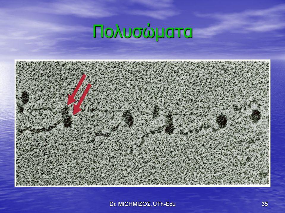 Dr. ΜΙCHΜΙΖΟΣ, UTh-Edu35 Πολυσώματα
