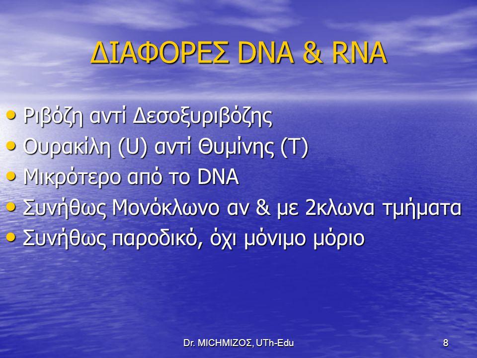 Dr. ΜΙCHΜΙΖΟΣ, UTh-Edu8 ΔΙΑΦΟΡΕΣ DNA & RNA Ριβόζη αντί Δεσοξυριβόζης Ριβόζη αντί Δεσοξυριβόζης Ουρακίλη (U) αντί Θυμίνης (Τ) Ουρακίλη (U) αντί Θυμίνης