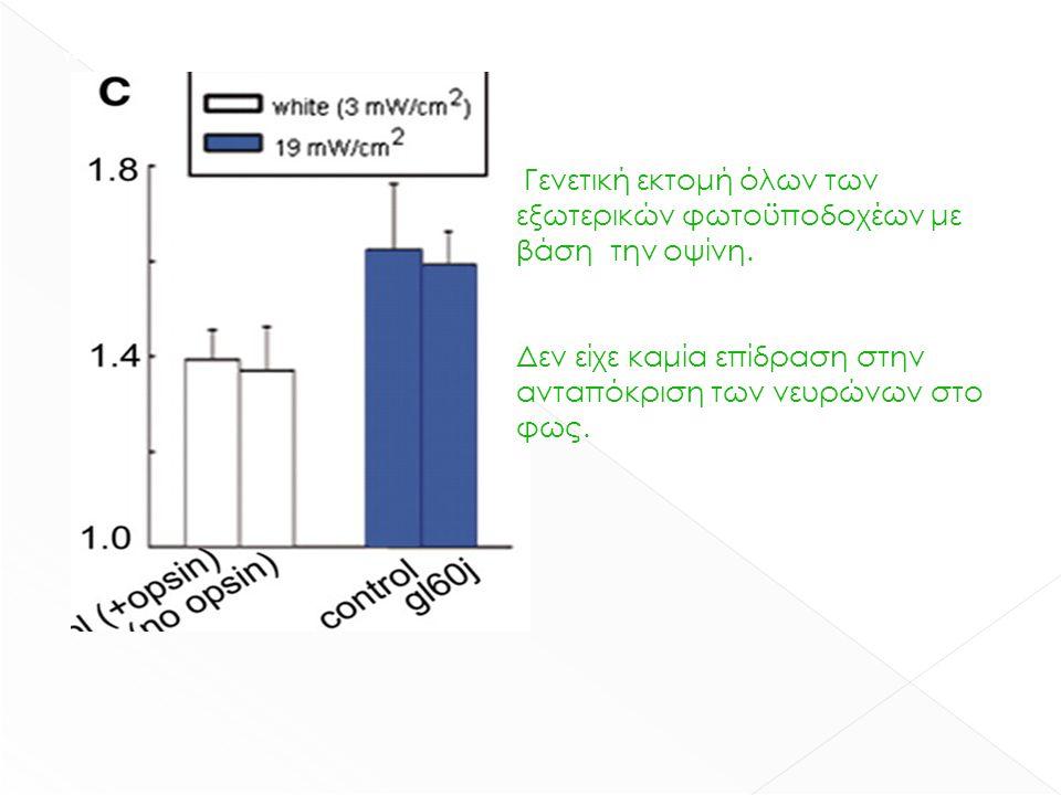 γενετική εκτομή όλων των εξωτερικών φωτοϋποδοχέων με βάση την οψίνη. Δεν είχε καμία επίδραση στην ανταπόκριση των νευρώνων στο φως. Γενετική εκτομή όλ